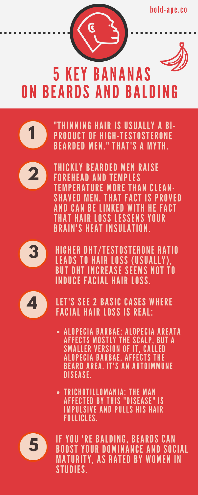 boldape Infographic on beards and baldness